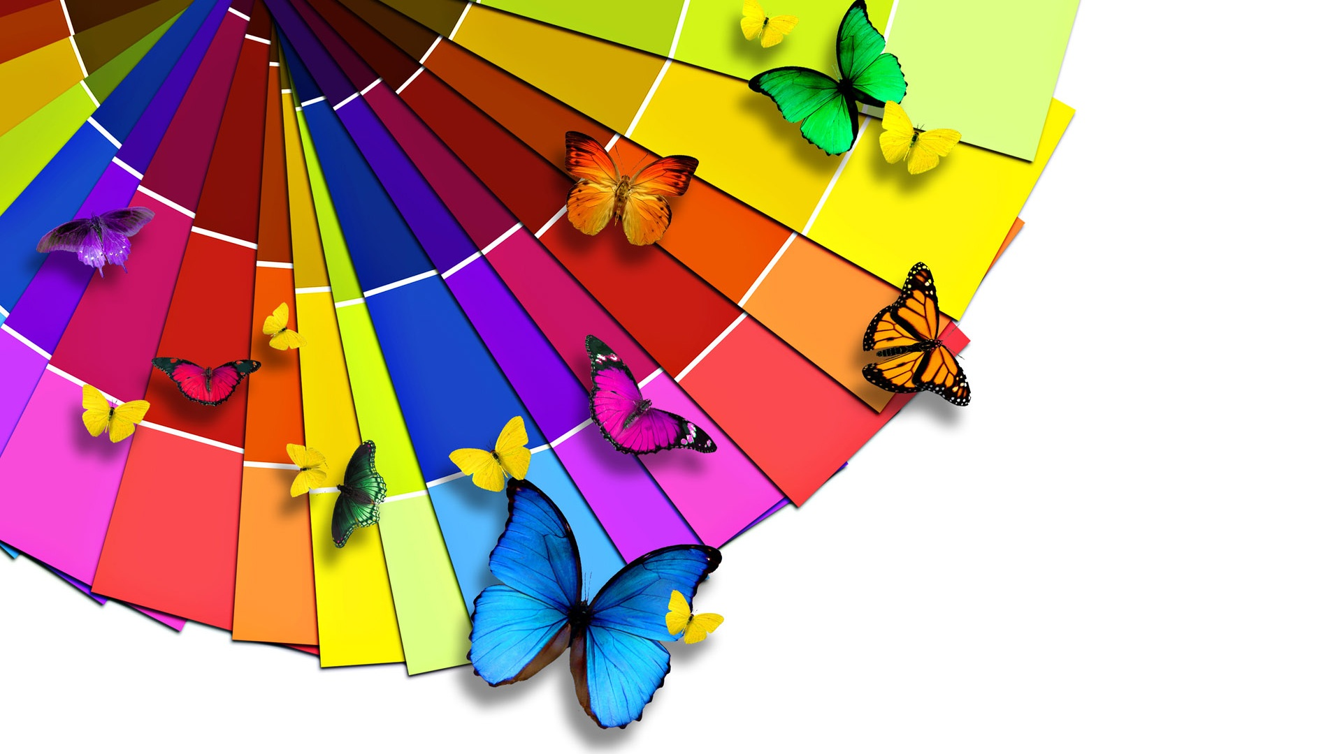 Bright-color-palette-and-the-Butterfly_1920x1080
